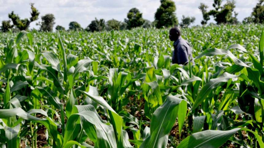 The role of agriculture in Nigeria's economic development