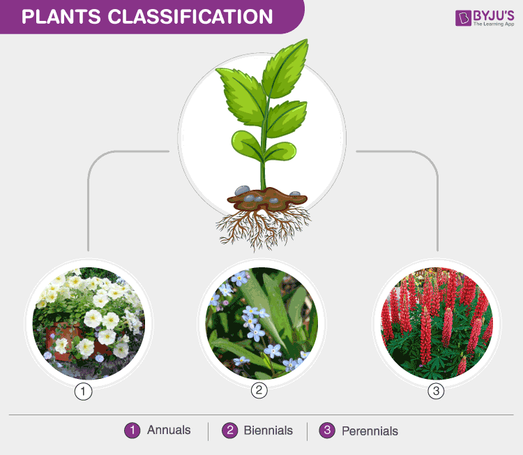 Plants And Its Classification