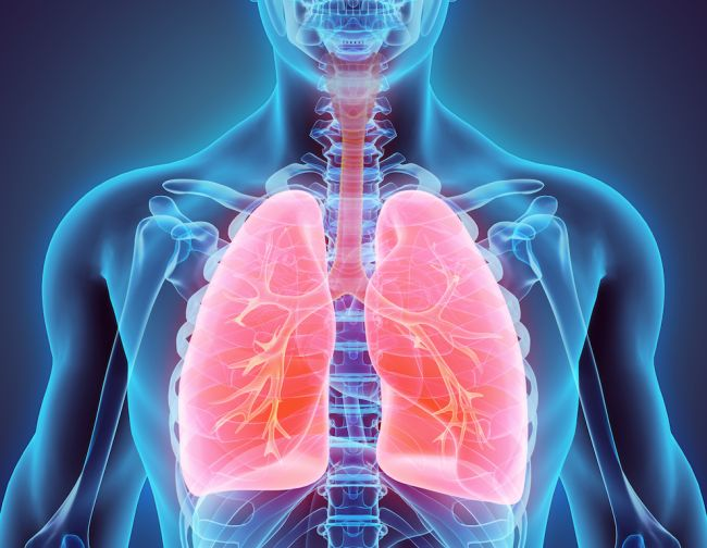 Respiratory System: Our Avenue for Gas Exchange